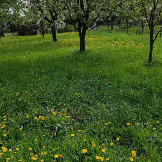 Jaro v zadní Kratunce